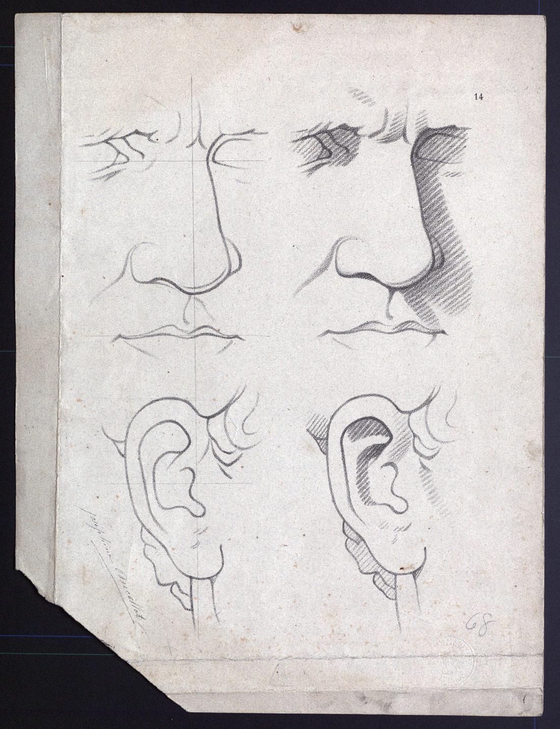 Estudio clásico de nariz y oreja] - Colección Digital de Estampas de ABA